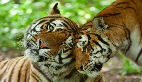 Tigerpark Dassow